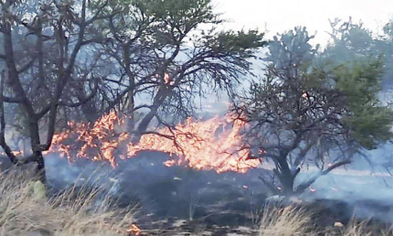 El incendio afectó 15 hectáreas en el Bosque de Cobos.