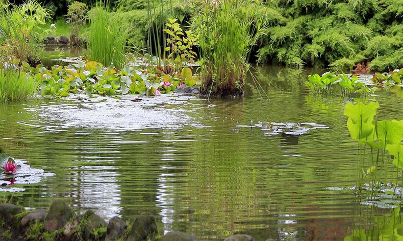 El pequeño cayó por accidente al estanque y sus amigos no pudieron auxiliarlo.