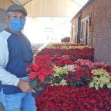 Comerciantes de flores esperan buenas ventas con las nochebuenas.