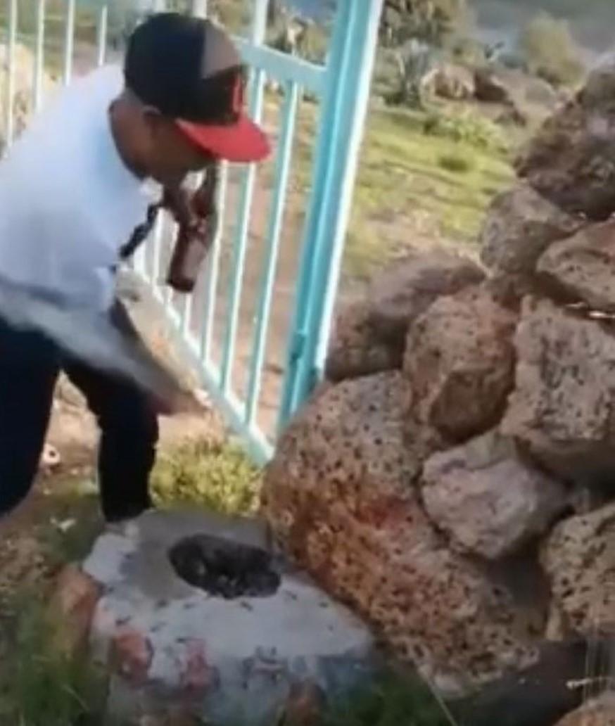 Maltrato animal, gatitos, San José de Gracia.